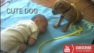 Cute animals | Cute dog with kid | funny video | dog and kid | funny animal videos