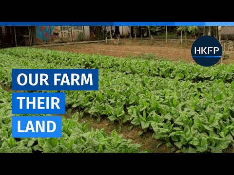 Our Farm, Their Land: The Fight for Mapopo Community Farm