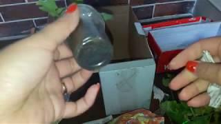 Розпакування посилок з рослинами (живці пеларгоній) unboxing