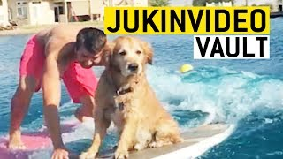 Golden Retriever Video Compilation from the JukinVideo Vault