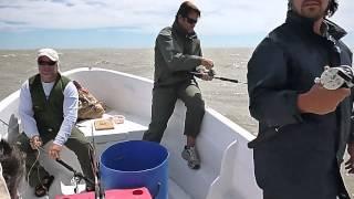 Pesca de Corvinas Embarcado en Los Pocitos-10 de Febrero de 2015
