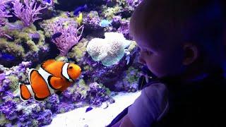 Океанариум#1: Риф. Коралловые рыбки как на коралловом рифе в Красном море Египта.