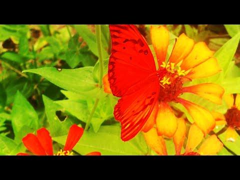 Las Mariposas Mas Bonitas Del Mundo Danzando Alegremente Sobre Las