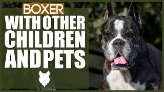 BOXER WITH CHILDREN AND PETS