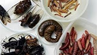 Insects and strange food in China - Beijing Wangfujing Night Market