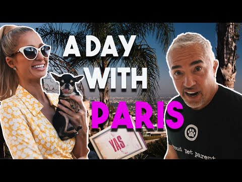 Are dogs reflections of their owners? With PARIS HILTON