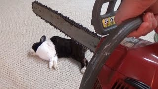 Waking a sleeping rabbit with a chainsaw