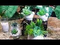 Dollar Tree DIY Floral Arrangement Ideas/Tutorial/How To ~ Dupes for High End Florals