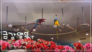 21.01.21   롯데월드 환상의숲   금강앵무