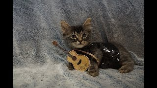 Why This Vet Dressed Her Cat Up In Taylor Swift's Most Iconic Styles
