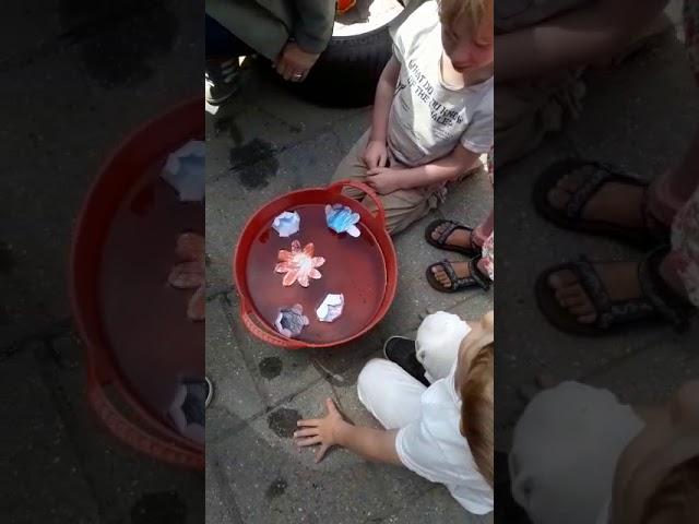 BSO Zaandam - Magische Bloemen