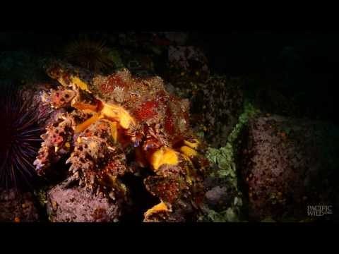 Diver's Log: Great Bear Sea, Early Nov. 2013