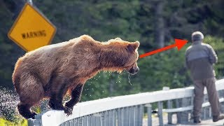 When Grizzly Bears Attack