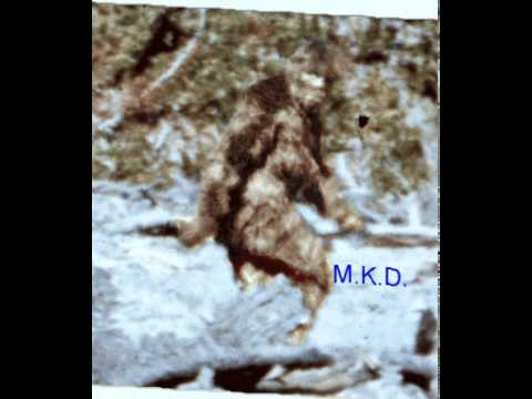 Patterson Bigfoot Film with High Quality Inserts