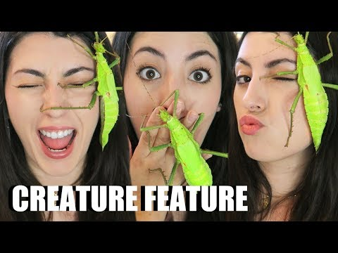 GIANT Stick Insect | Jungle Nymph | Creature Feature