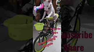 Riding bycycle ...Boxer...A mix breed intelligent dog ..