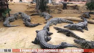 A Pierrelatte, 350 crocodiles confinés