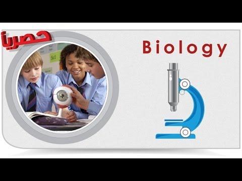 Biology | lack of dominance