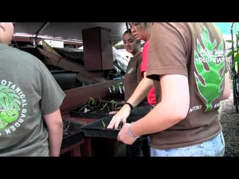 Kokua Aina Youth Initiative (KAYI) Program at the National Tropical Botanical Garden 2012