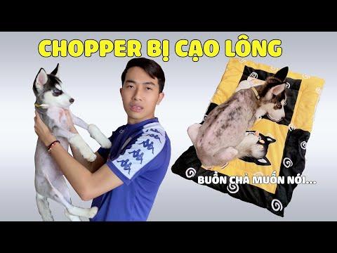 CrisDevilGamer HOẢNG HỐT KHI THẤY CHOPPER BỊ CẠO LÔNG