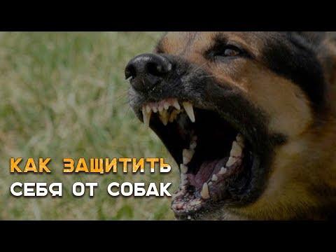 Агрессивные собаки и защита от них: 7 эффективных способов