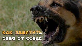 Защита от бродячих собак |Наука Побеждать|