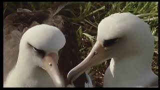 The Tick and the Bird (Wildlife Documentary)