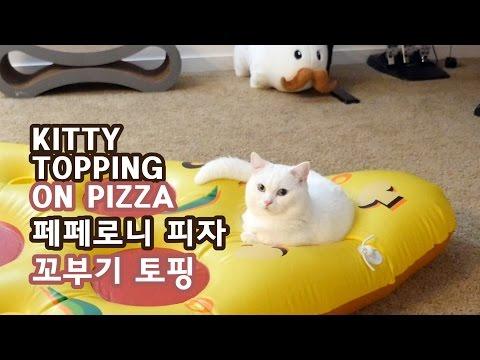 페페로니 피자 고양이 토핑 - 꼬부기 1살+6개월 Cat Gato ねこ 短足猫