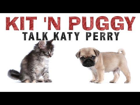 Katy Perry - Kit 'N Puggy
