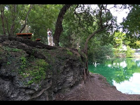 The Coolest Dog Park We've Ever Been To!