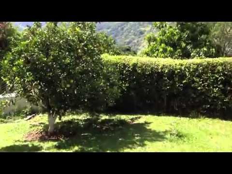 VIDEO TESTIMONIO: CITRICOS CON LOMBRICOL FO-E01