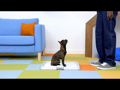 Tips On How To Train Your Dog Or New Puppy To Use Potty Pads
