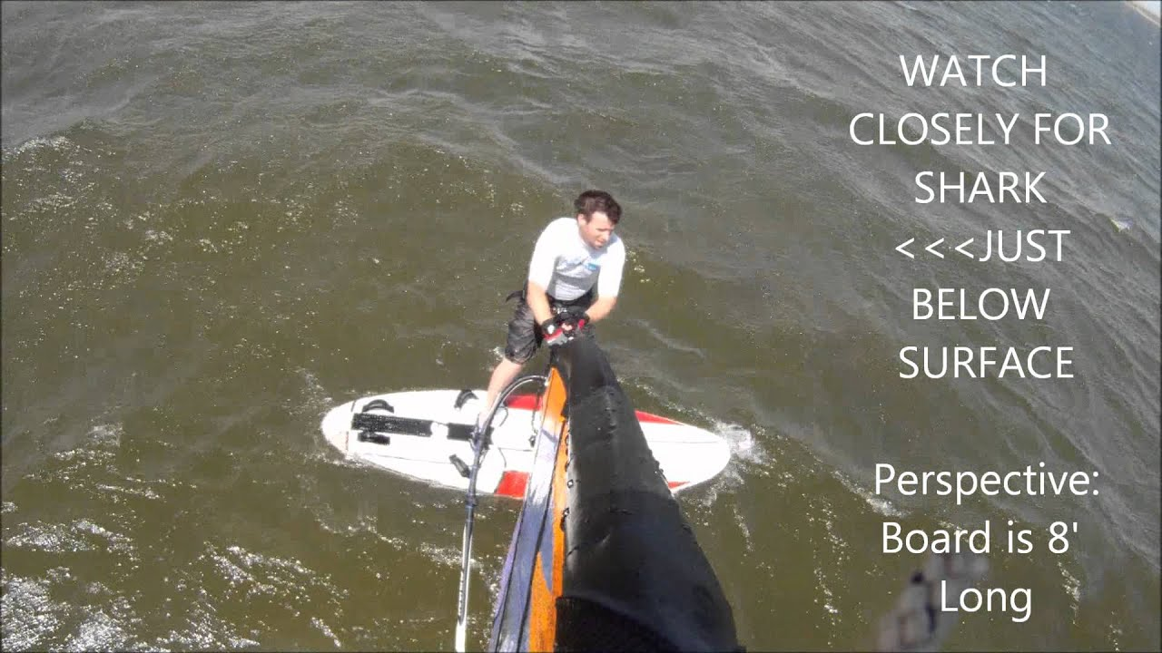 Bull shark passing by windsurfer off canadian hole in avon for Shark fishing nc