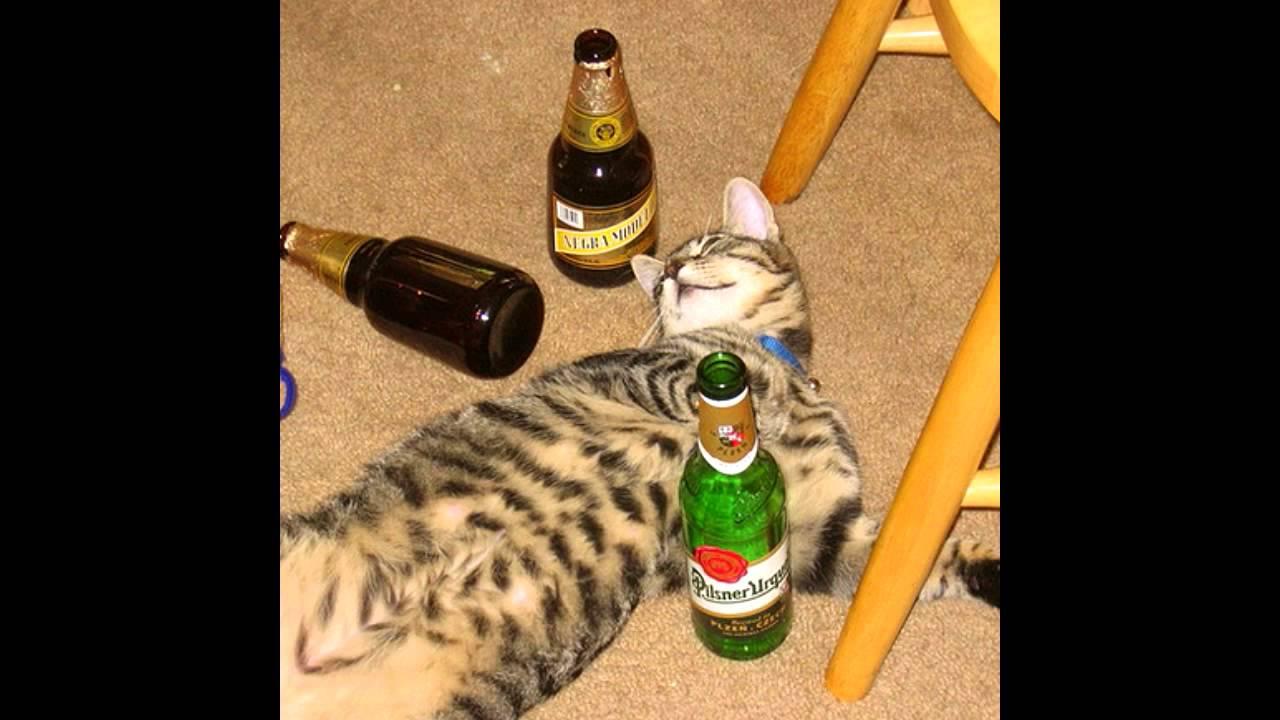 Katze Alkohol