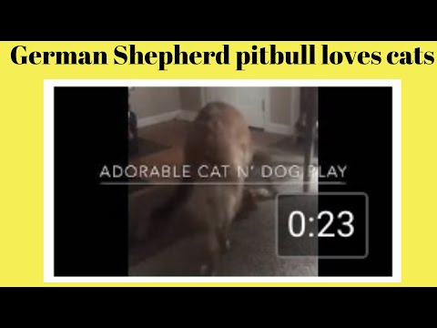 Who wins dog vs cat and the theme music makes hilarious video
