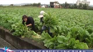 新竹縣政府-竹東客家鹹菜遵循腳踩古法製作 風味香醇