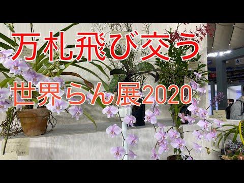 「世界らん展2020」に行ってきました!!!