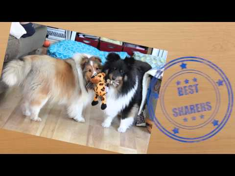 How to Behave at a Dog Show (Official Trailer)