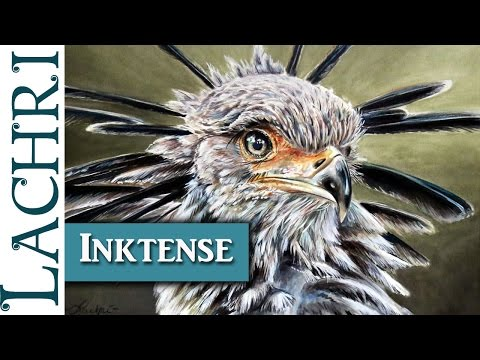 Tips for painting or drawing with Inktense  - demonstration - secretary bird - w/ Lachri
