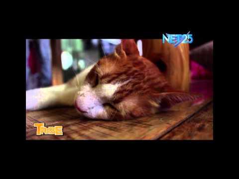 TRRiBE- Miao Cat Cafe