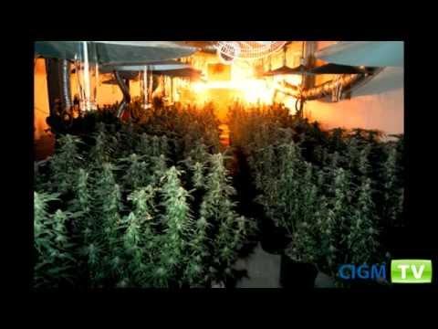 Des indices pour détecter les Maisons de culture de cannabis