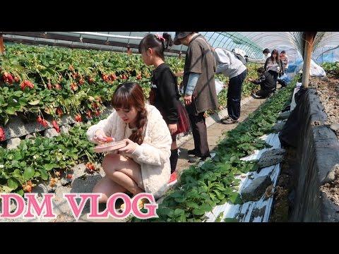 VLOG#57 ke Makam makan Strawberry wakana Punya Hp