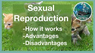 Of sexual reproduction Advantages