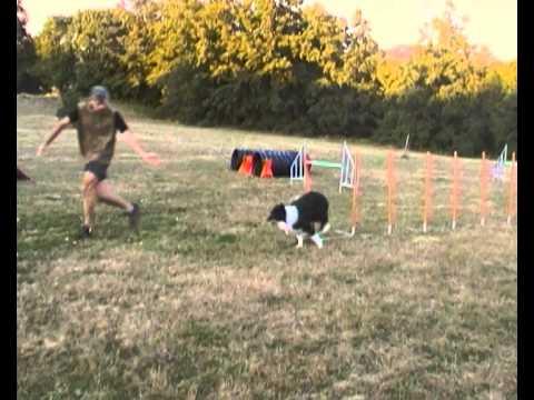 Agility dog border collie allevamento di petrademone beowulf settembre 2010.MP4