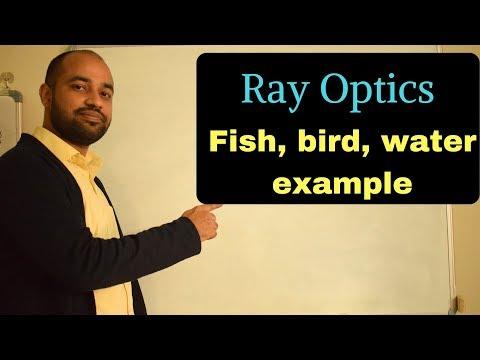Ray Optics 19 - Fish, Bird, Water Example