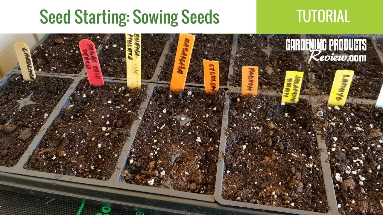 How to Successfully Start Seeds Indoors - Peppers, Tomatoes, Herbs ...