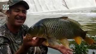 Pesca de grandes carpas en el río y saludos