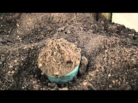 How to Build a Hill for Planting Squash : Planting Garlic & Gardening Tips