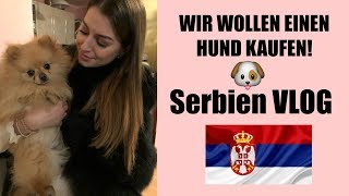 Serbien Vlog - wir suchen nach einem Pomeranian Hunde Welpen l Desideria Vlogs