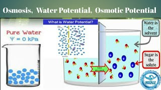 Osmosis | Water Potential | Solute Potential | Osmotic Potential | Osmotic Pressure | For MCAT